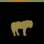 Equus paard